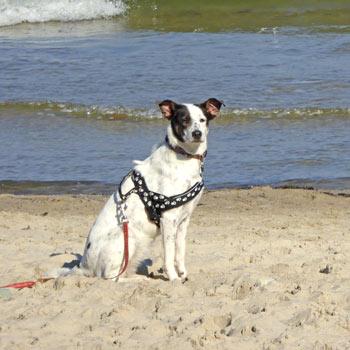 Urlaub mit hund hier die passende ferienwohnung auf r gen buchen for Urlaub auf juist mit hund