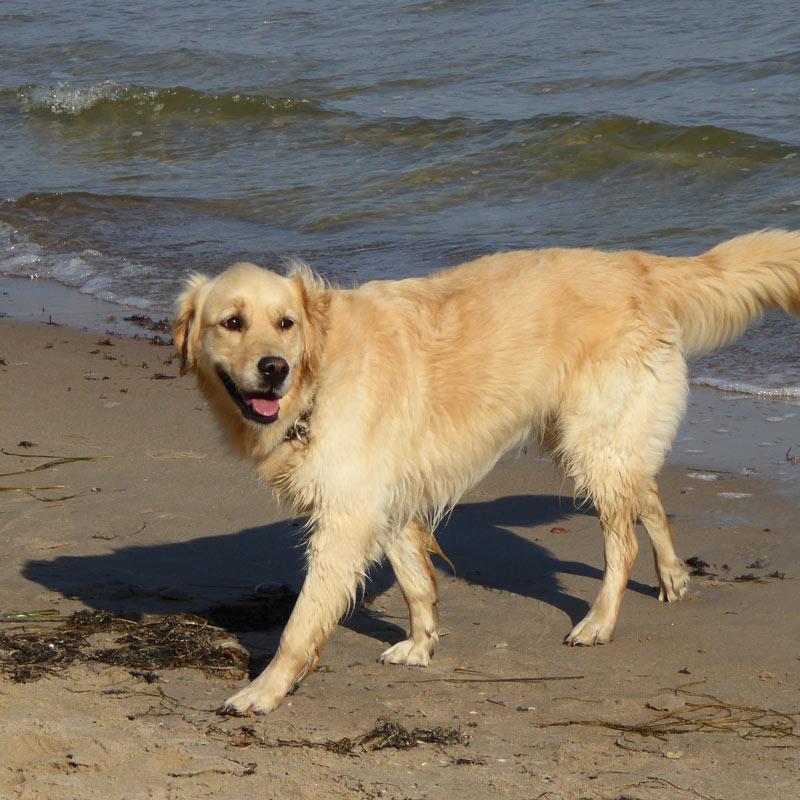 Ferien auf der Insel Rügen mit Hund