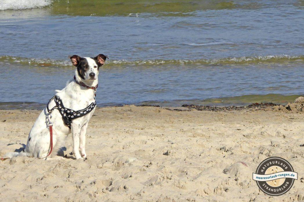Bringen Sie ihren Hund einfach mit in den Urlaub