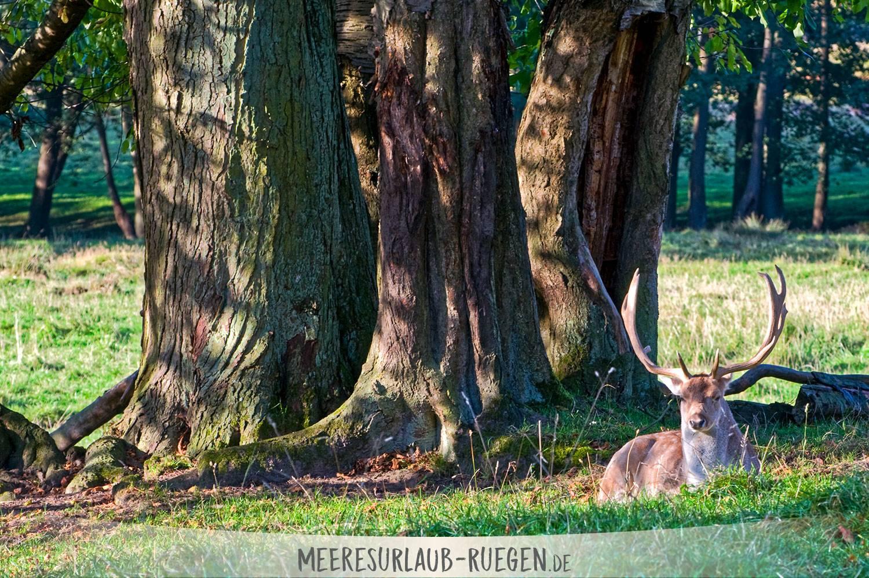 im Park von Putbus spazieren gehen
